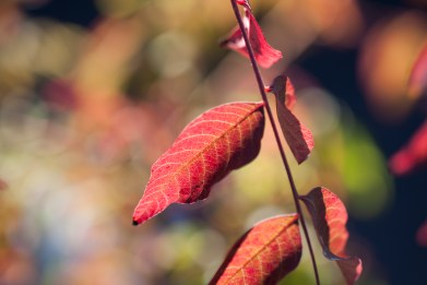 red-leaf-sprig-glowing