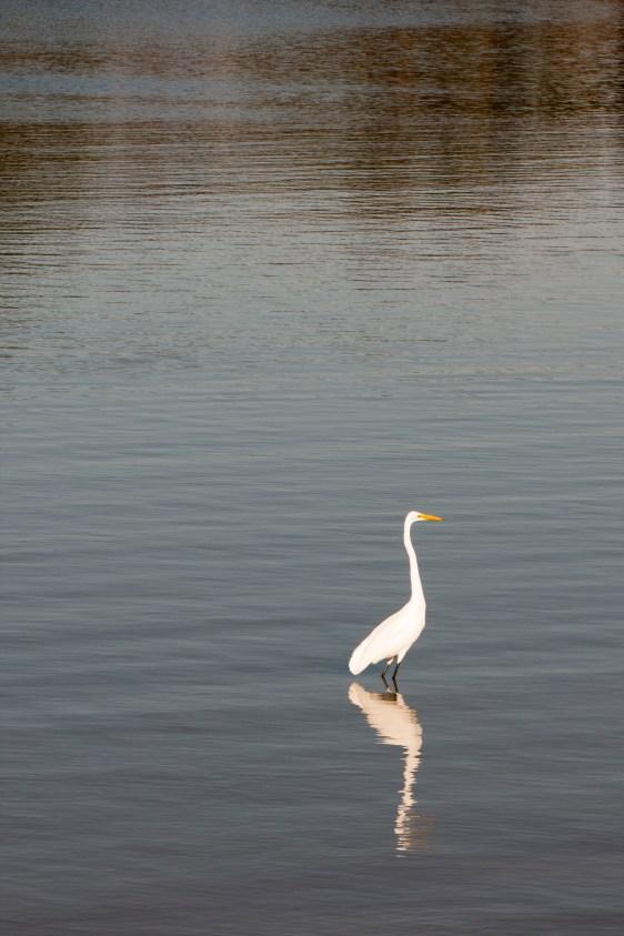 egret-reflecte