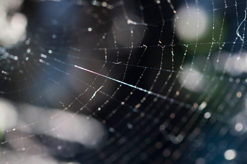 silk-web
