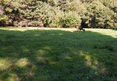 161124-wunderlich-feasting-deer