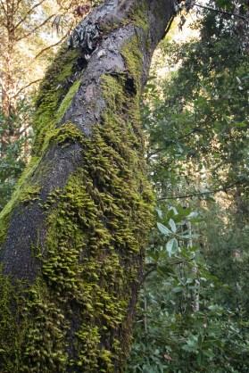 161124-wunderlich-lichen-tree