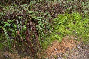 161124-wunderlich-moss-and-plants