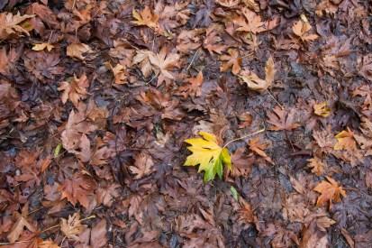 161124-wunderlich-one-yellow-leaf