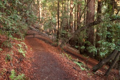 161124-wunderlich-redwood-needle-trail
