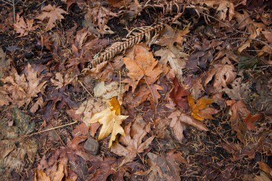161124-wunderlich-trail-leaves