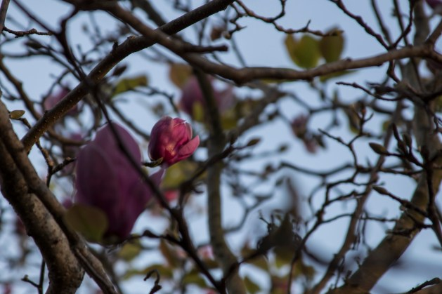 121616-magnolia-branches-fragments