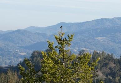 bird-on-watch