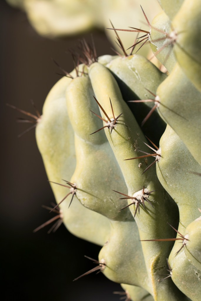 cactus-do-not-touch
