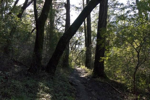 030817sun ahead blocked by tree