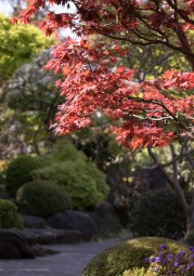 032817japanese maple path