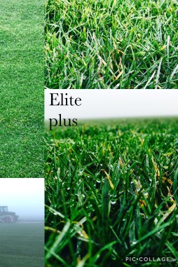 elite plus sod
