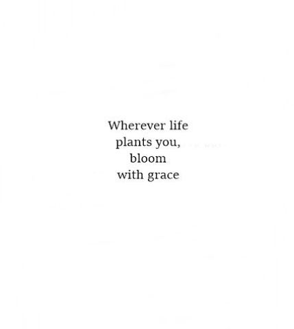 The Best Short Positive Quotes with Image whenever life plants you, bloom w,th grace