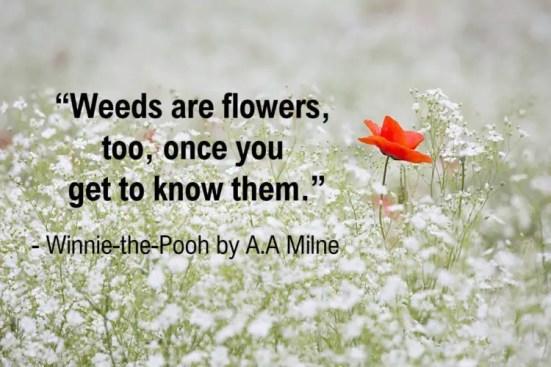 amazing winnie the pooh quotes