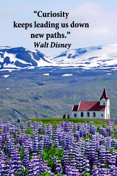 curiosity quotes from walt disney