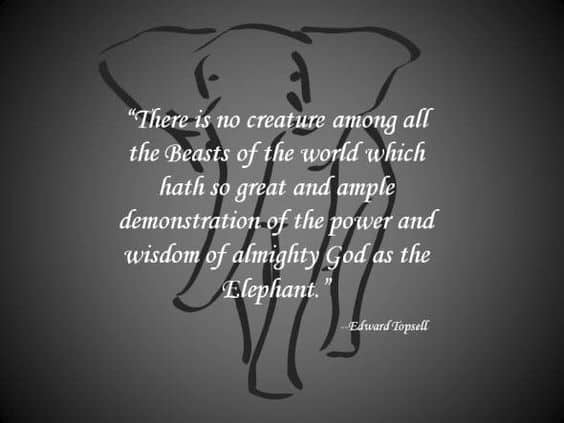 wisdom from elephant quotes