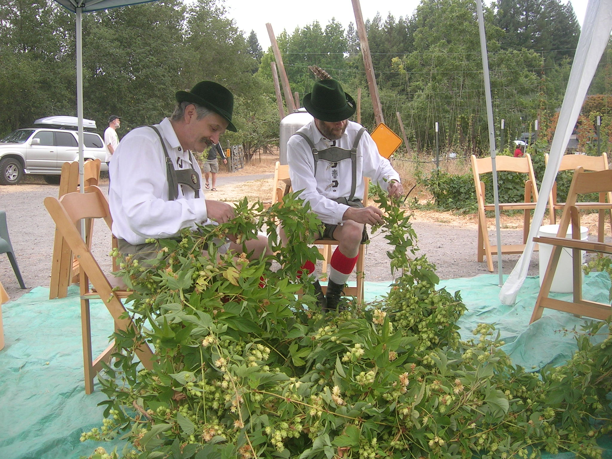 These curious migrant hop pickers got to work