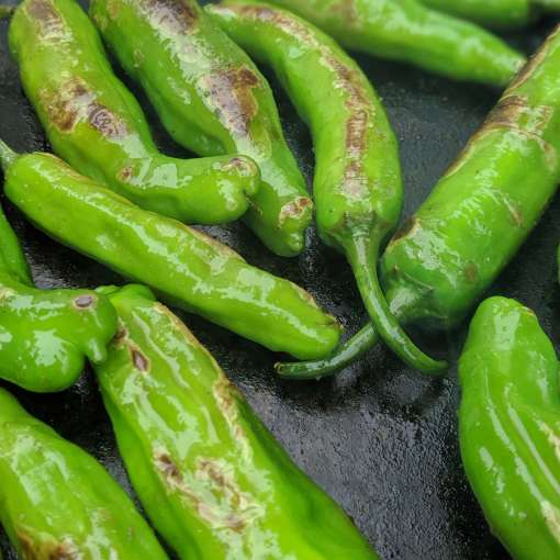 shishitto peppers frying in a pan