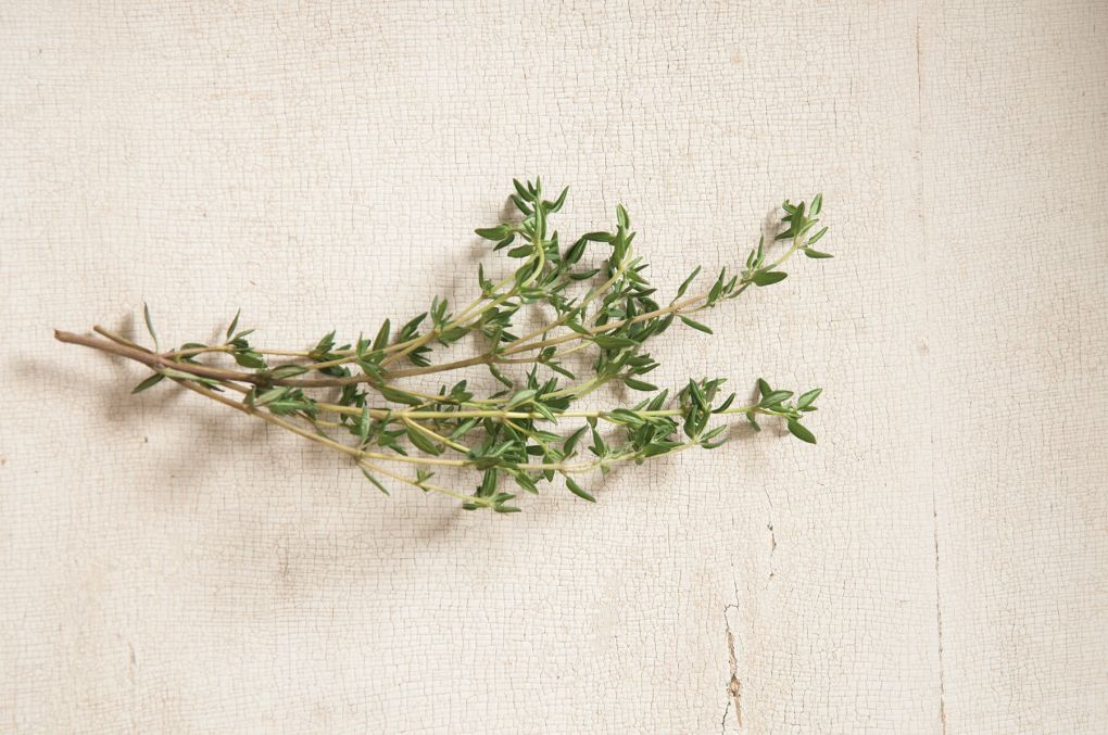 Summer Thyme Image