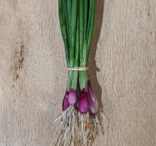 purple bunching onions