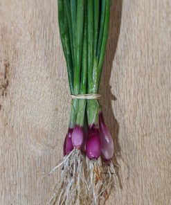 purple bunching onions