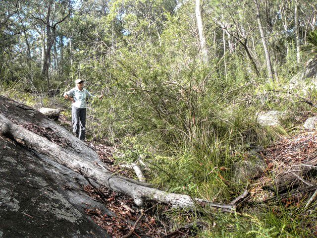 Sharon with the unusual stand of Rigid Bottlebrush in the creek
