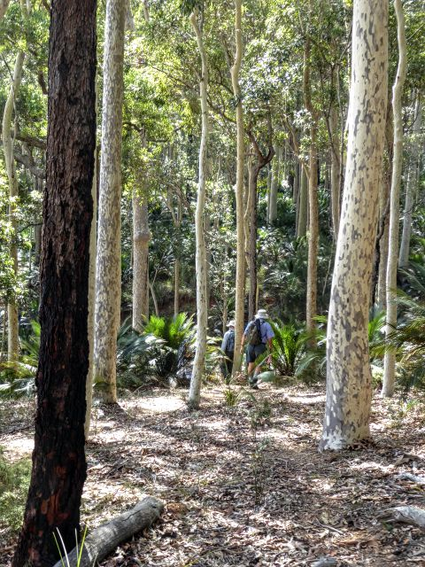 Spotted gum forest on Square Head
