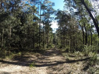 Old trails in Mogo State Forest