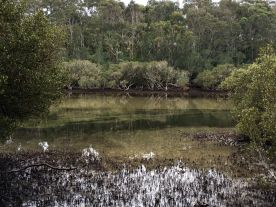 Upper reaches of Candlagan Creek