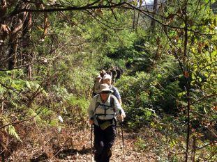 Lawlers Creek track