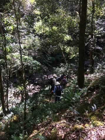 Members climbing down to the creek