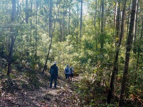 Shady track on Mogo Village Bushwalk