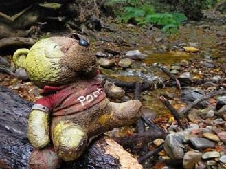 Pooh bear on an adventure