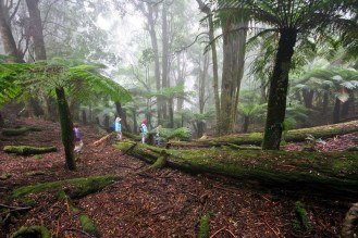 Entering the first rainforest area