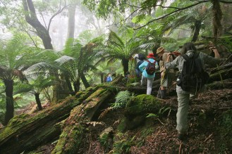 Walking through first rainforest area