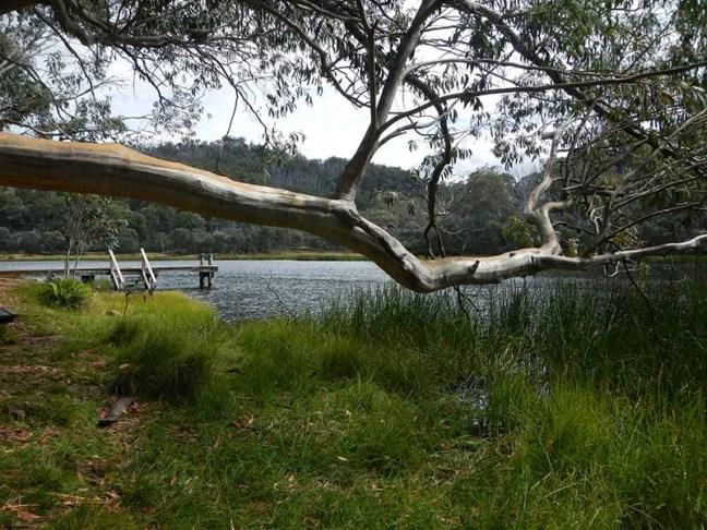 Lush green by the lake