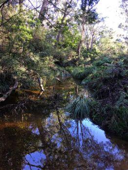 Lawlers Creek