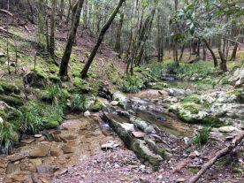 Cowdroy Creek