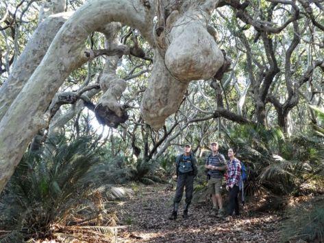 Brian, Mark and Morgan under the moose tree