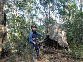 Carol and a big ex tree