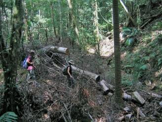 Bush bashing around sawn logs.
