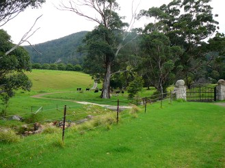 Lush valley at the foot of Gulaga.