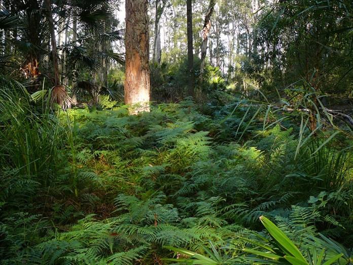 Sunlight on ferns.
