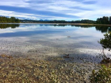 Moruya River estuary at low tide.