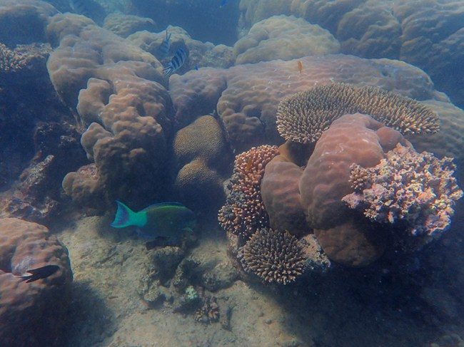 Coral garden on the Ningaloo Reef.