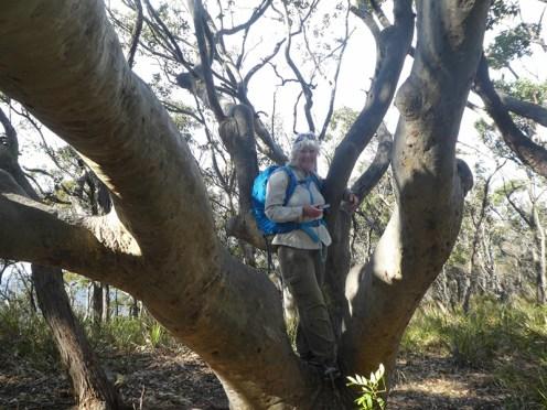 Donna hugs a tree.