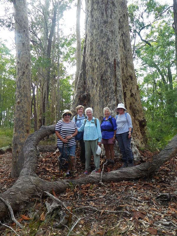 Deborah, Anne, Jan, Nancy and Jane dwarfed by nature.
