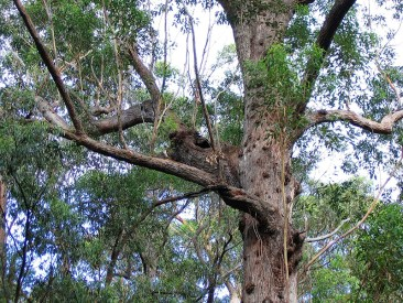 A lovely nesting site for a lucky bird or perhaps a possum?