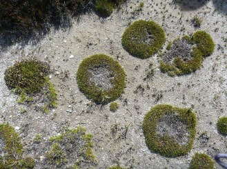 Interesting vegetation patterns in the bogs.