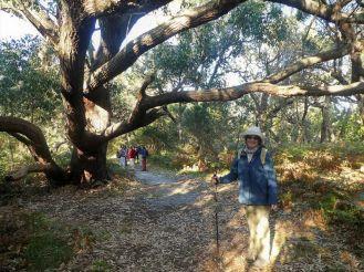 Jane under a spreading Swamp Mahogany tree