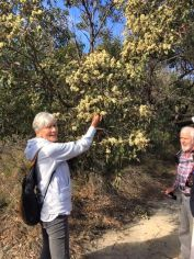 Margaret with low hanging eucalypt blossom